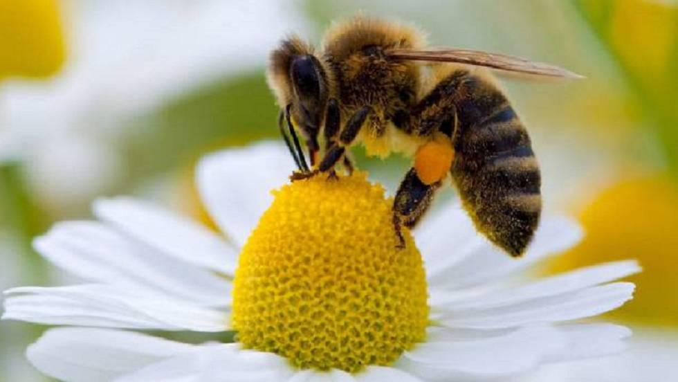 Aprueba Yucatán ley que protege a abejas y su medio ambiente