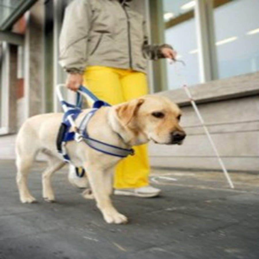Personas con discapacidad más allá de barreras sociales. Noticias en tiempo real