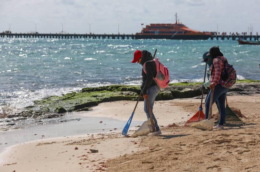 En Solidaridad hay playas  limpias de sargazo